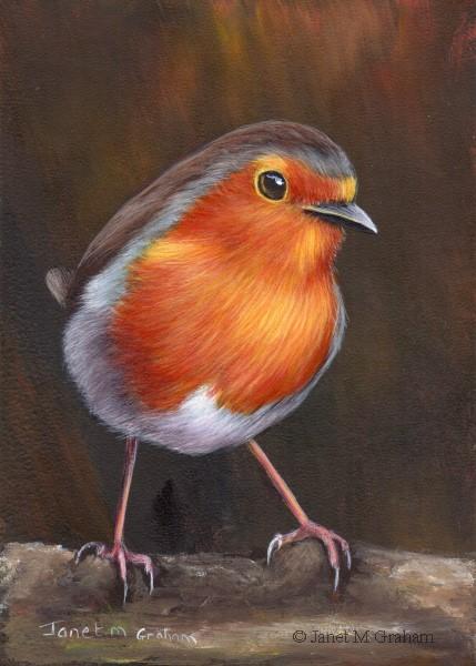 """Robin No 17"" original fine art by Janet Graham"