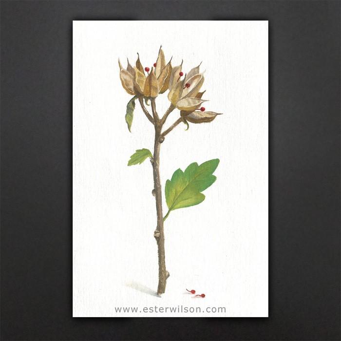 """""""Seeds"""" original fine art by Ester Wilson"""