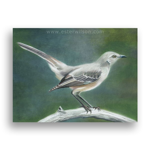 """Mockingbird"" original fine art by Ester Wilson"