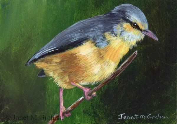 """Cape Crombec ACEO"" original fine art by Janet Graham"