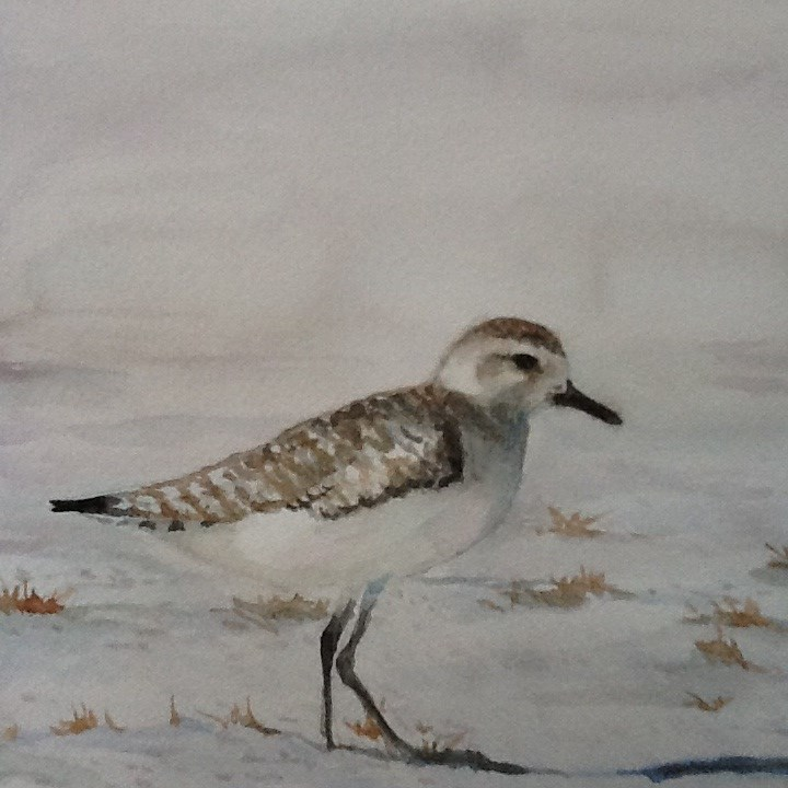"""Shore Bird-Sand Piper"" original fine art by Charlotte Yealey"