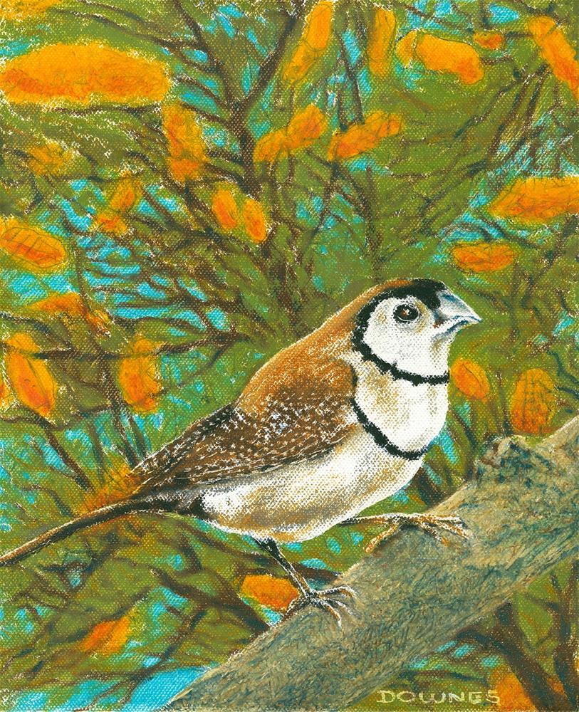 """151 DOUBLE-BARRED FINCH"" original fine art by Trevor Downes"