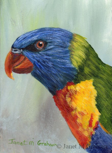 """Rainbow Lorikeet ACEO"" original fine art by Janet Graham"