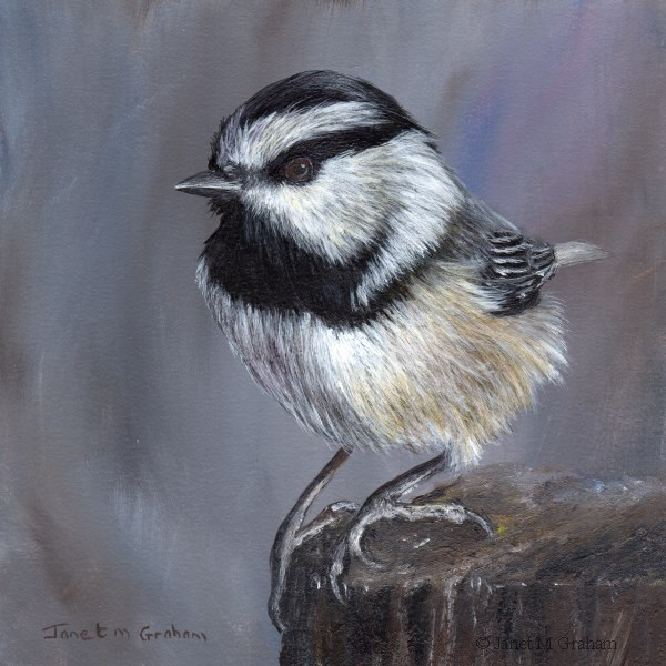 """Mountain Chickadee No 3"" original fine art by Janet Graham"