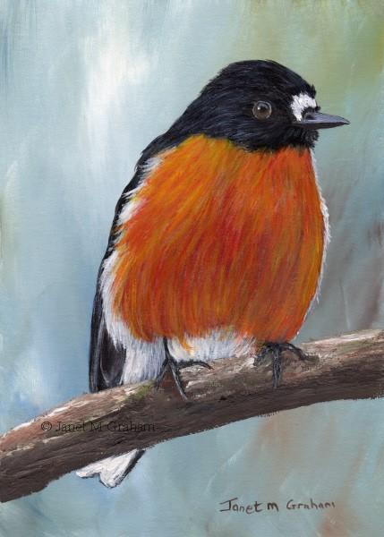 """Flame Robin No 3"" original fine art by Janet Graham"