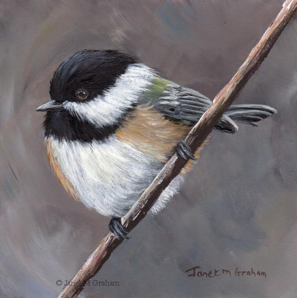 """""""Black Capped Chickadee No 10"""" original fine art by Janet Graham"""