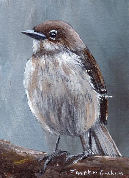 """Northern Mockingbird ACEO"" original fine art by Janet Graham"