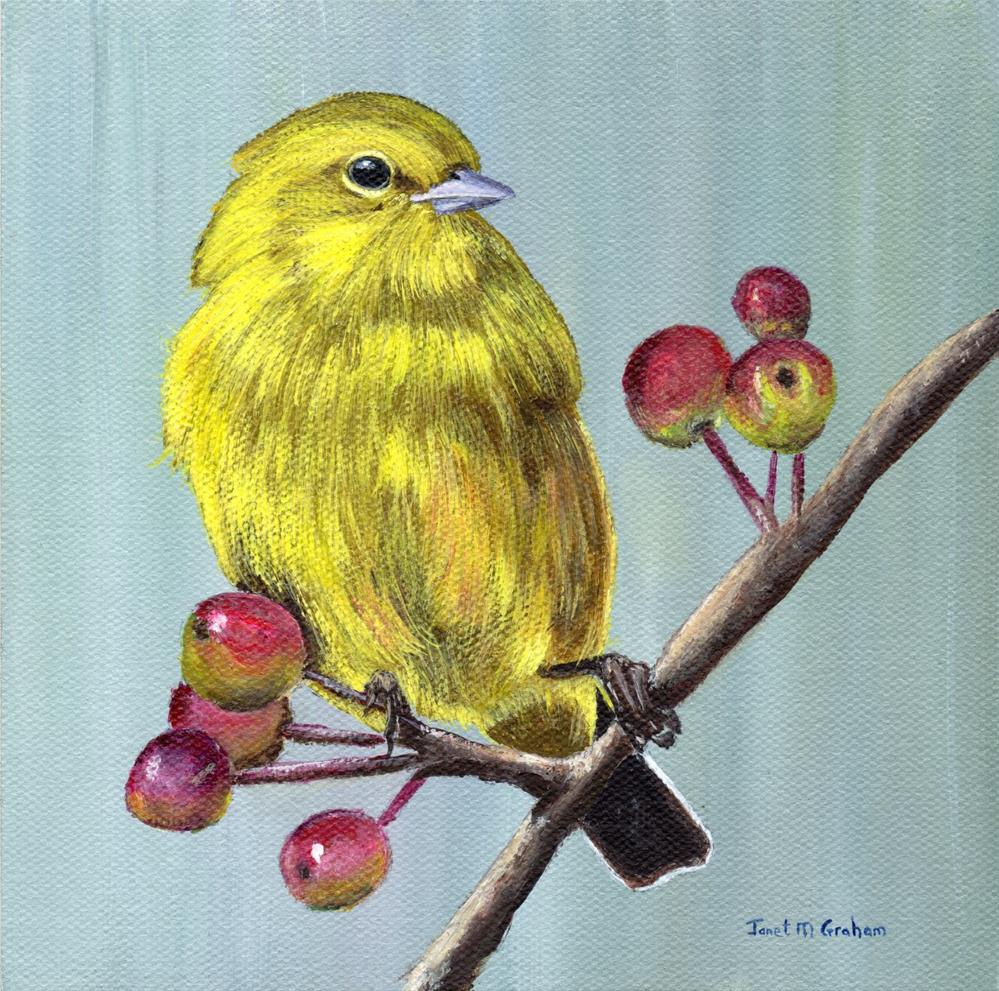 """Yellow Warbler"" original fine art by Janet Graham"