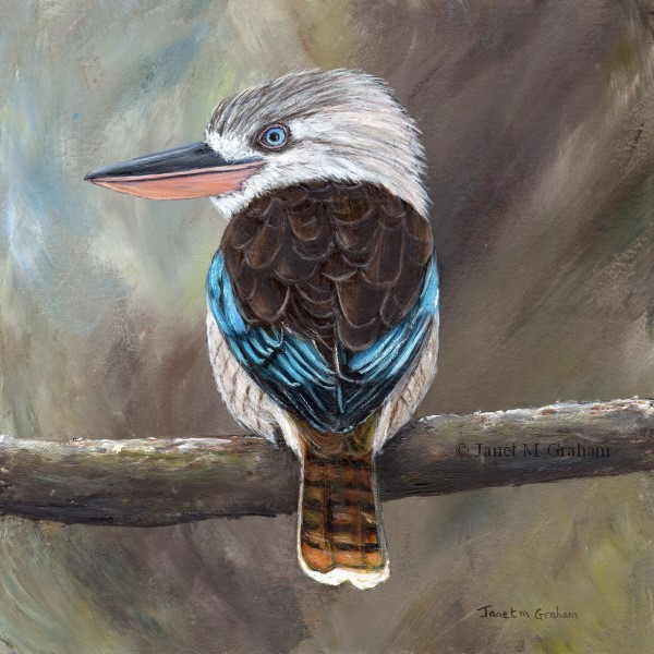 """Blue Winged Kookaburra"" original fine art by Janet Graham"