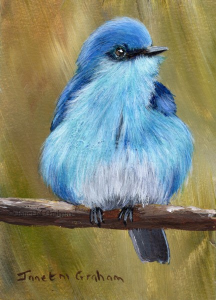 """Mountain Bluebird ACEO"" original fine art by Janet Graham"