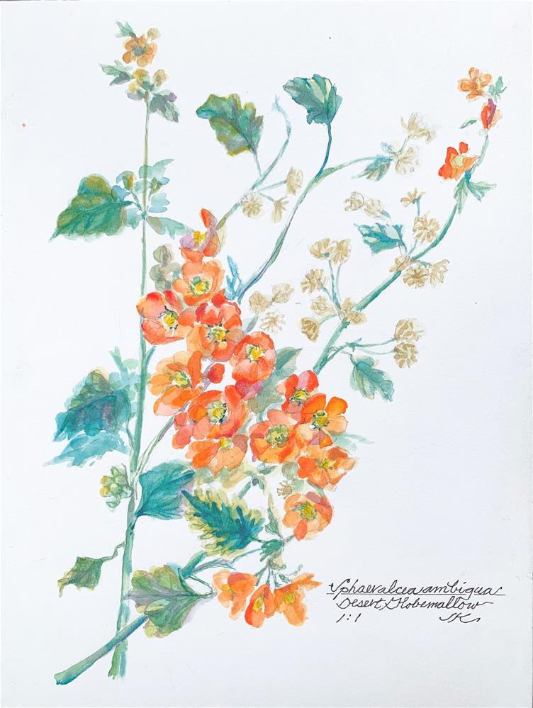 """Sphaeralcea ambigua - Desert Globemallow"" original fine art by Jean Krueger"