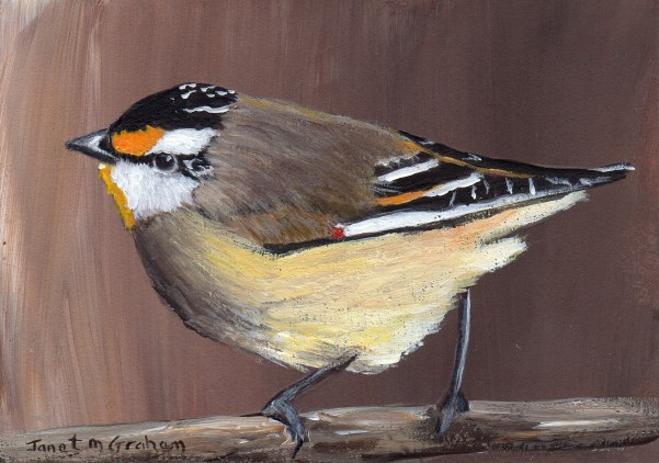 """""""Striated Pardalote ACEO"""" original fine art by Janet Graham"""