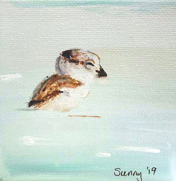 """Sleepy Piping Plover Chick"" original fine art by Sunny Avocado"