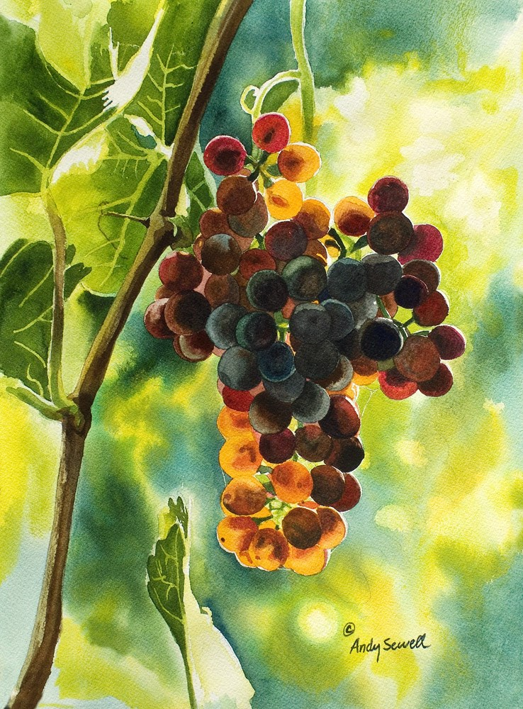 """""""Red Grapes Glow"""" original fine art by Andy Sewell"""