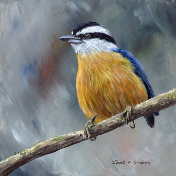 """Red Breasted Nuthatch No 7"" original fine art by Janet Graham"
