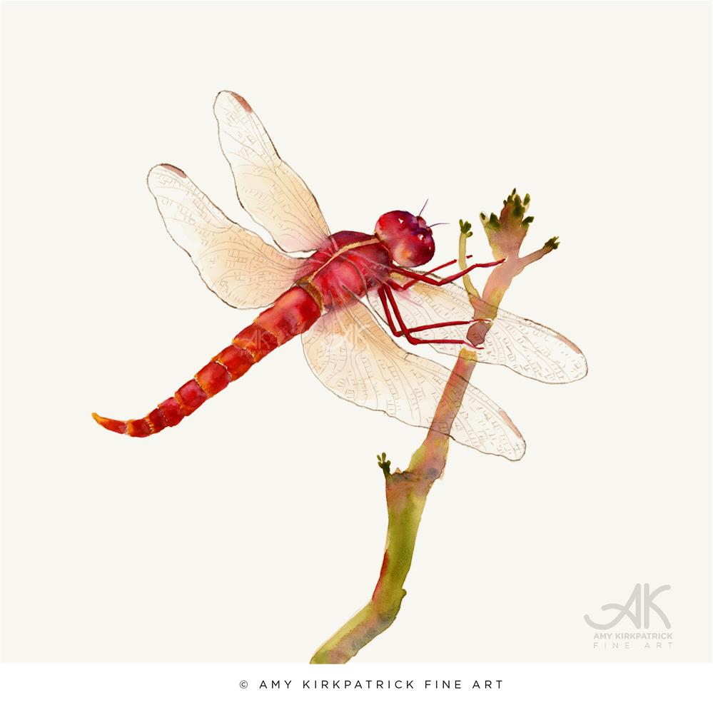 """RED DRAGONFLY #0449"" original fine art by Amy Kirkpatrick"