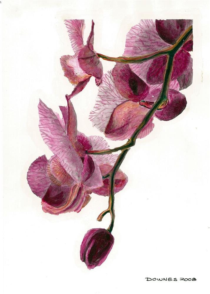 """192 ORCHID"" original fine art by Trevor Downes"