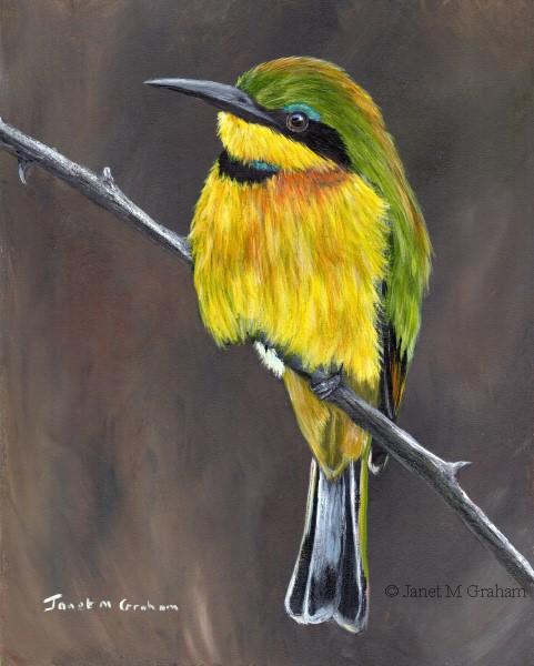 """Little Bee Eater No 2"" original fine art by Janet Graham"