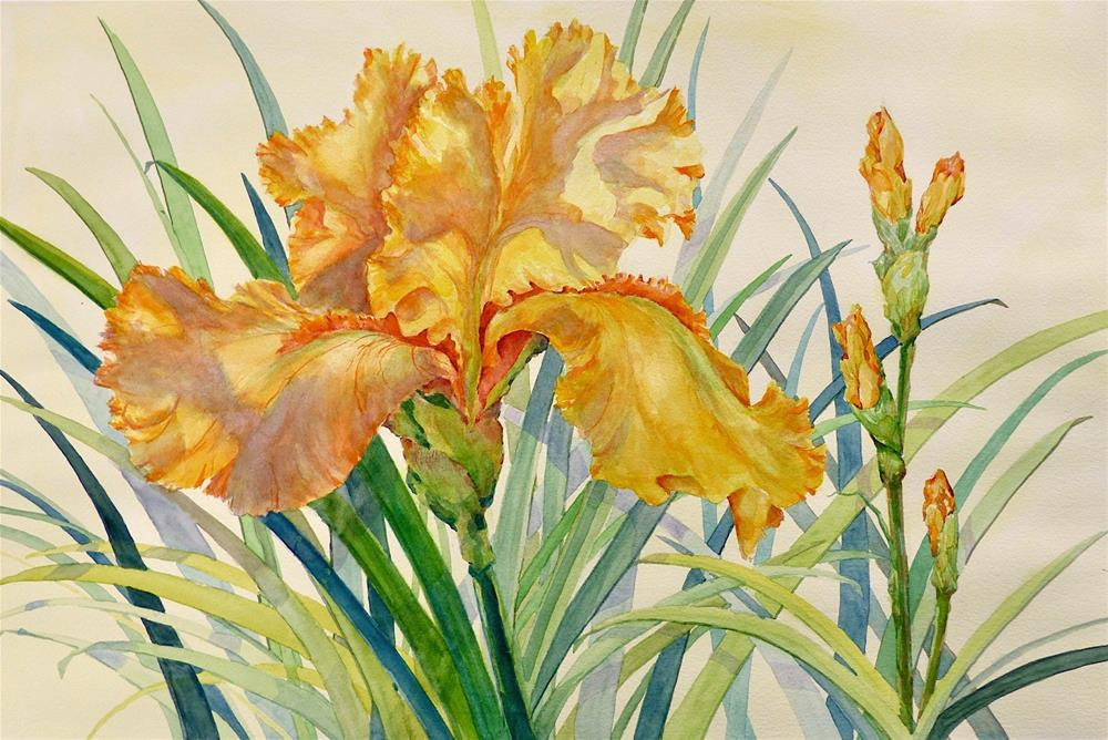 """Golden Iris"" original fine art by Judith Freeman Clark"