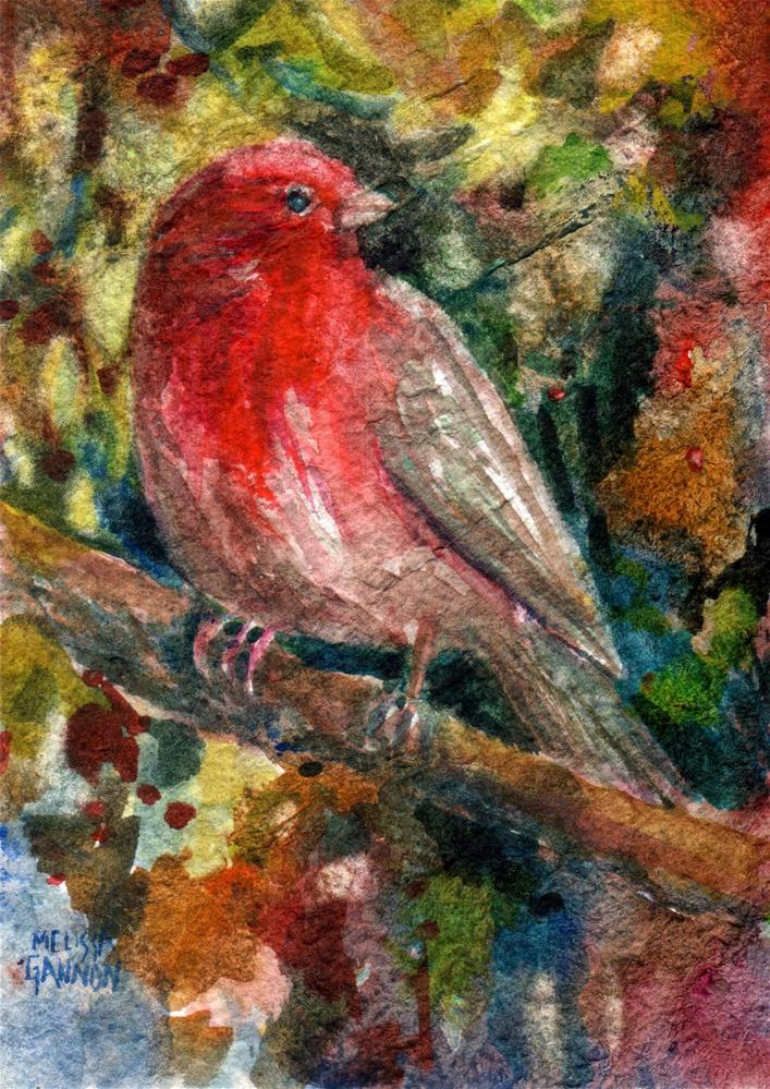 """House Finch"" original fine art by Melissa Gannon"