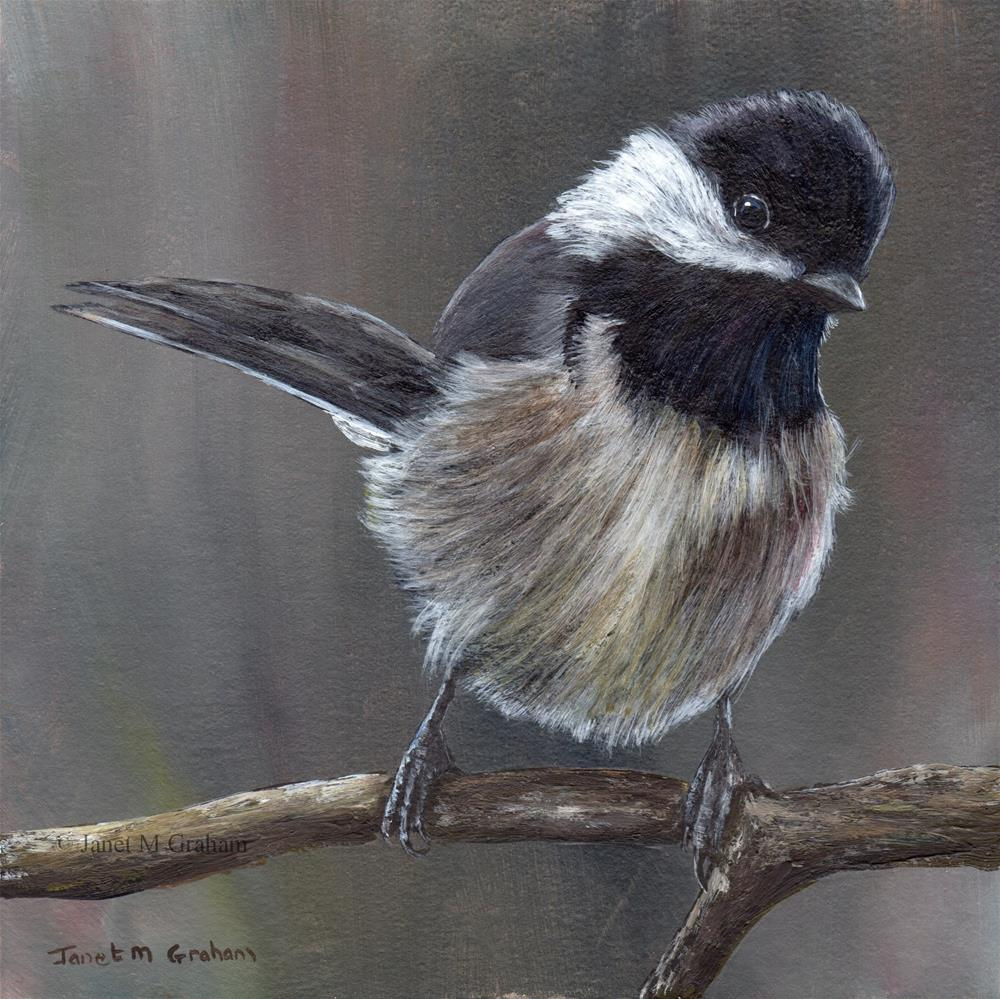 """Mexican Chickadee"" original fine art by Janet Graham"
