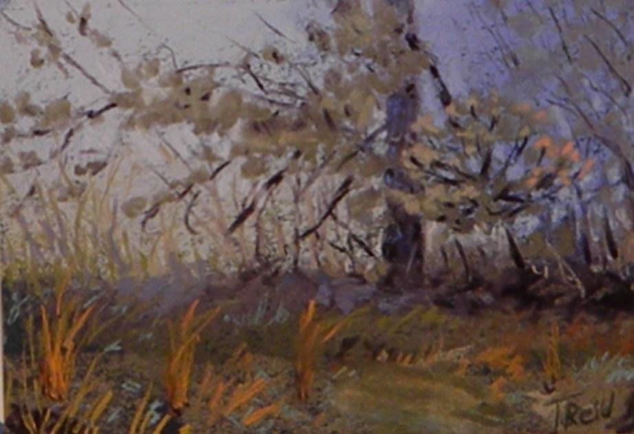"""""""Pine in the fog"""" original fine art by Toby Reid"""