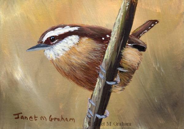 """Wren ACEO"" original fine art by Janet Graham"