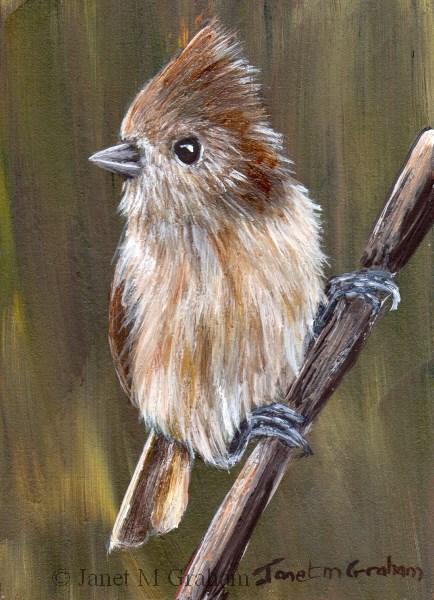 """""""Oak Titmouse ACEO"""" original fine art by Janet Graham"""
