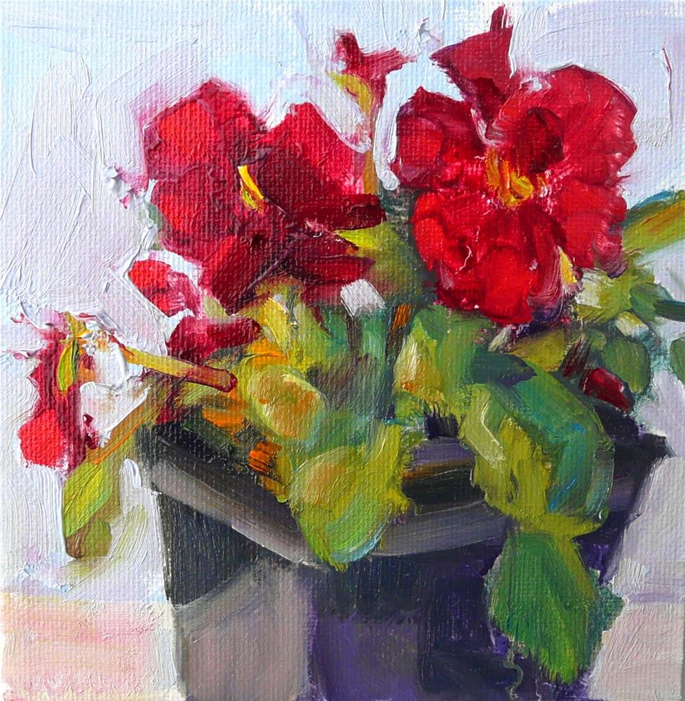 """Redish Pansy,still life,oil on canvas,6x6,Price$200"" original fine art by Joy Olney"