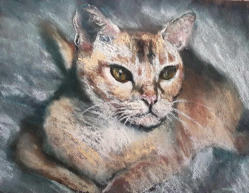 """""""Pastel cat"""" original fine art by Rentia Coetzee"""