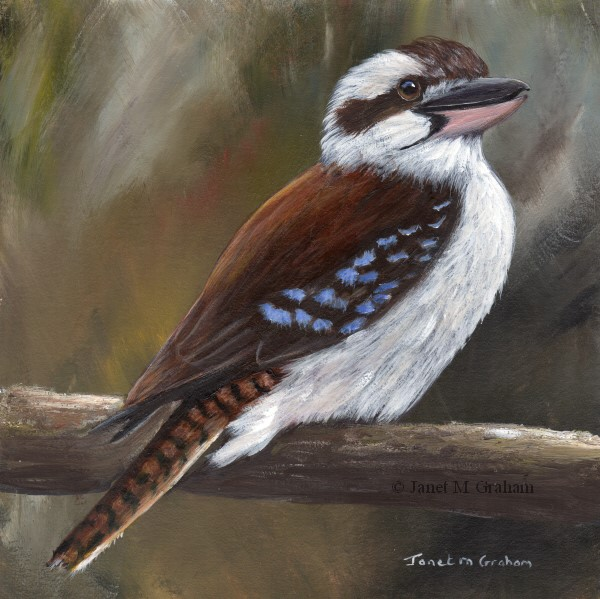 """Laughing Kookaburra No 3"" original fine art by Janet Graham"