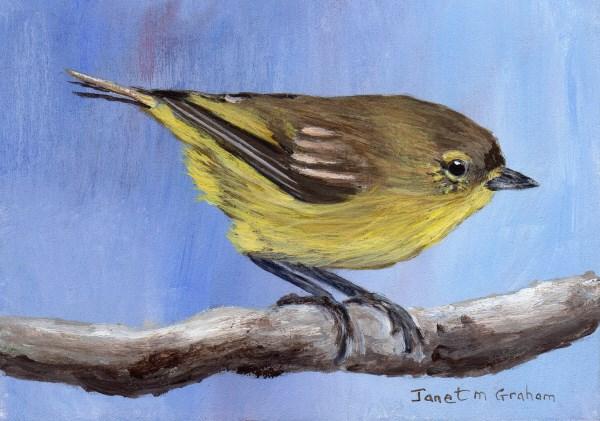 """Yellow Thornbill ACEO"" original fine art by Janet Graham"