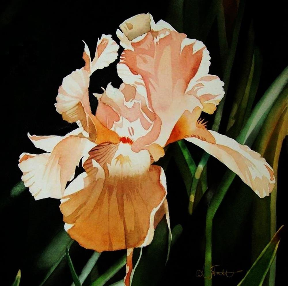 """Peach Iris"" original fine art by Jacqueline Gnott, TWSA, WHS"