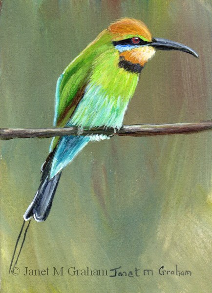 """""""Rainbow Bee Eater ACEO"""" original fine art by Janet Graham"""