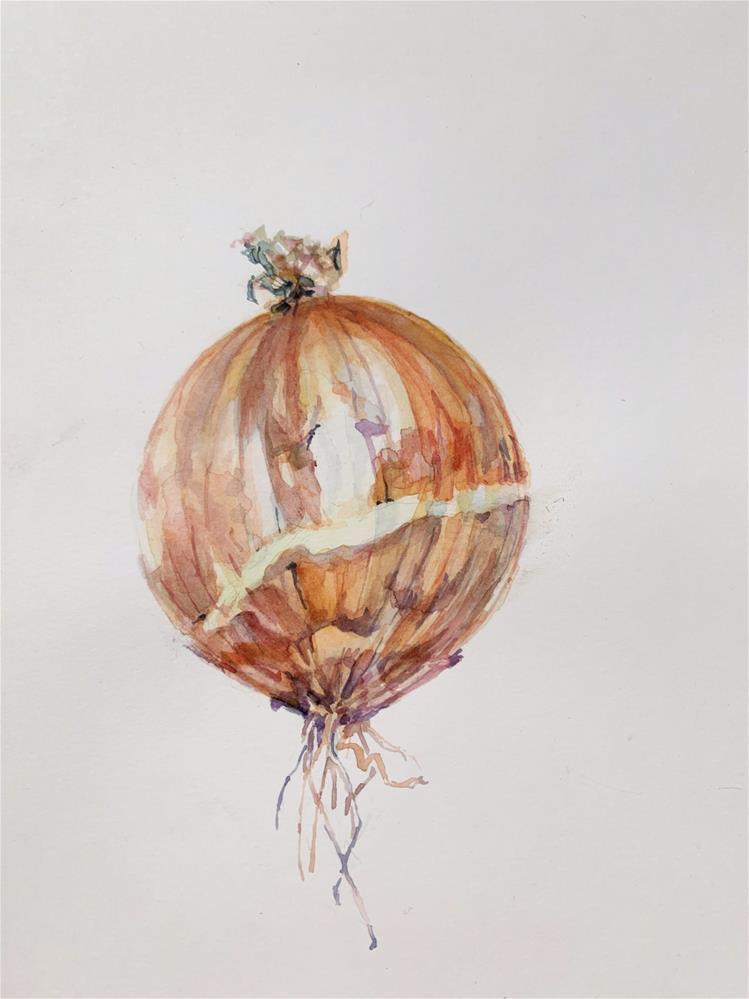 """Allium cepa - Common onion"" original fine art by Jean Krueger"