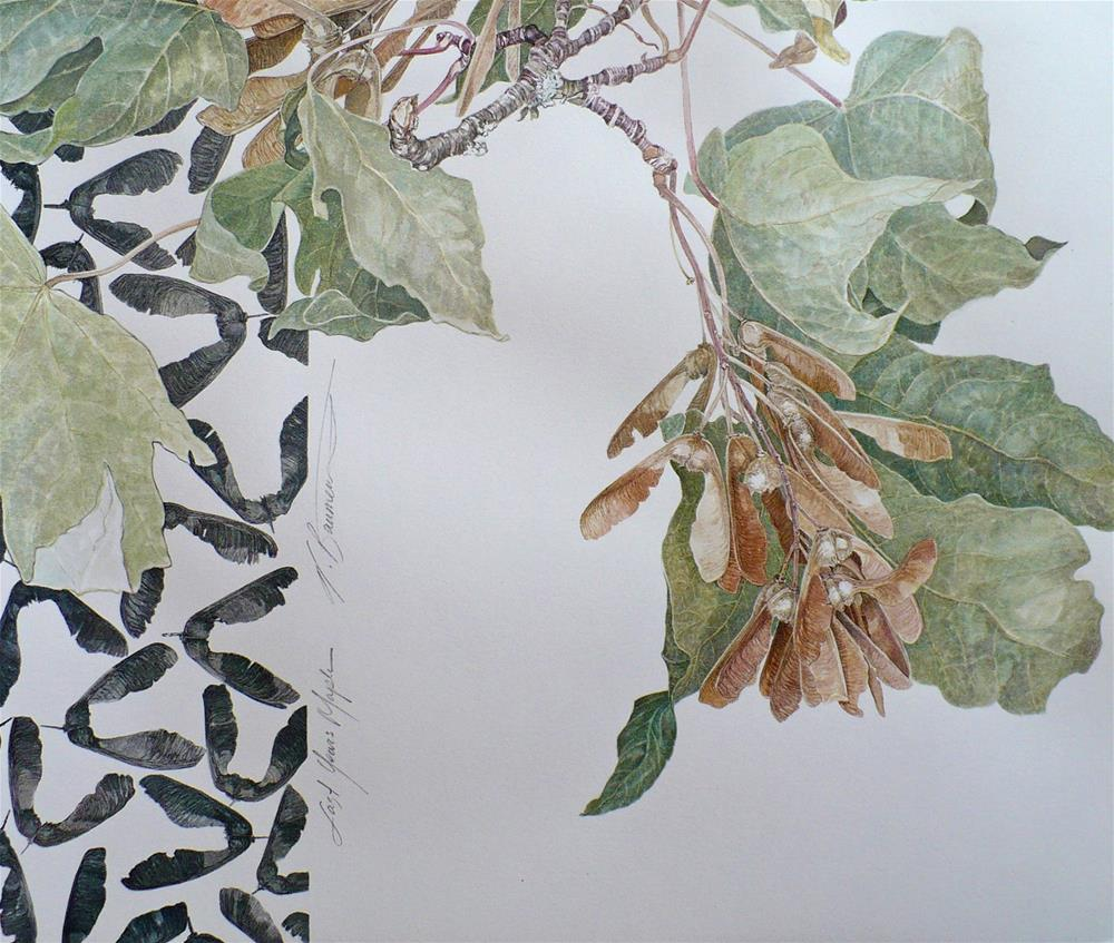 """Portfolio 1: Last Season's Maple (Acer)"" original fine art by Nicoletta Baumeister"