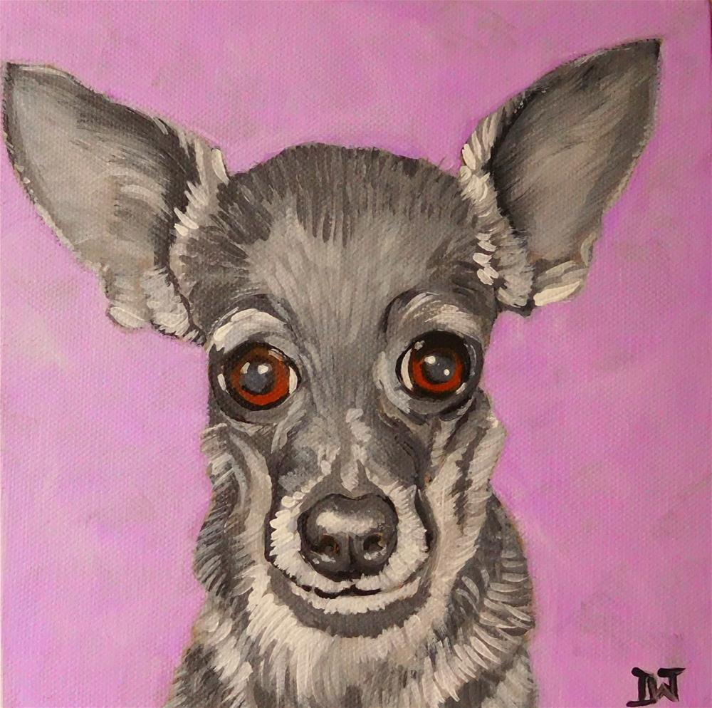 """Chihauhau"" original fine art by Daryl West"