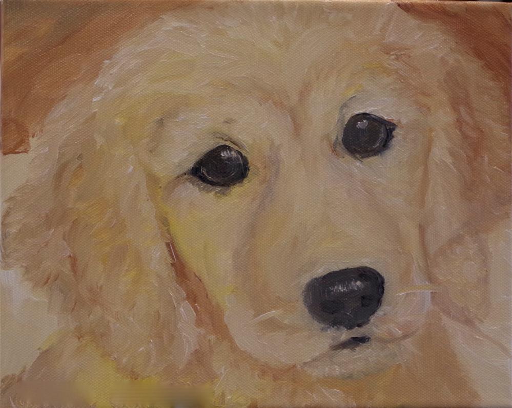 """""""Goldie"""" original fine art by Ann Cohen"""