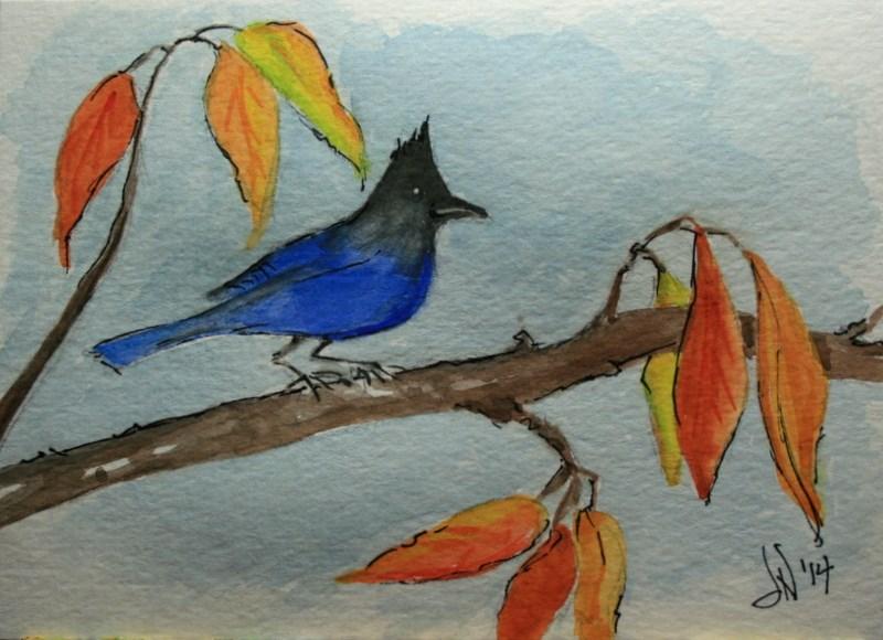 """""""Steller's Jay in Autumn"""" original fine art by Jean Nelson"""