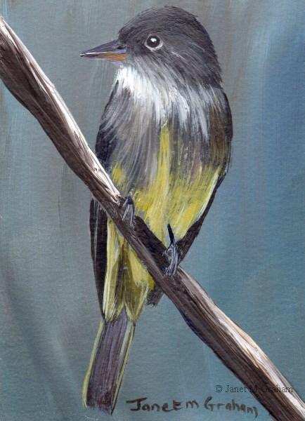 """Eastern Wood Pewee ACEO"" original fine art by Janet Graham"
