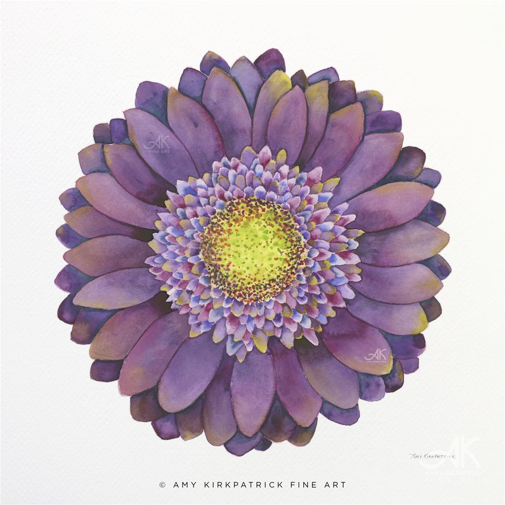 """PURPLE GERBERA DAISY #513"" original fine art by Amy Kirkpatrick"