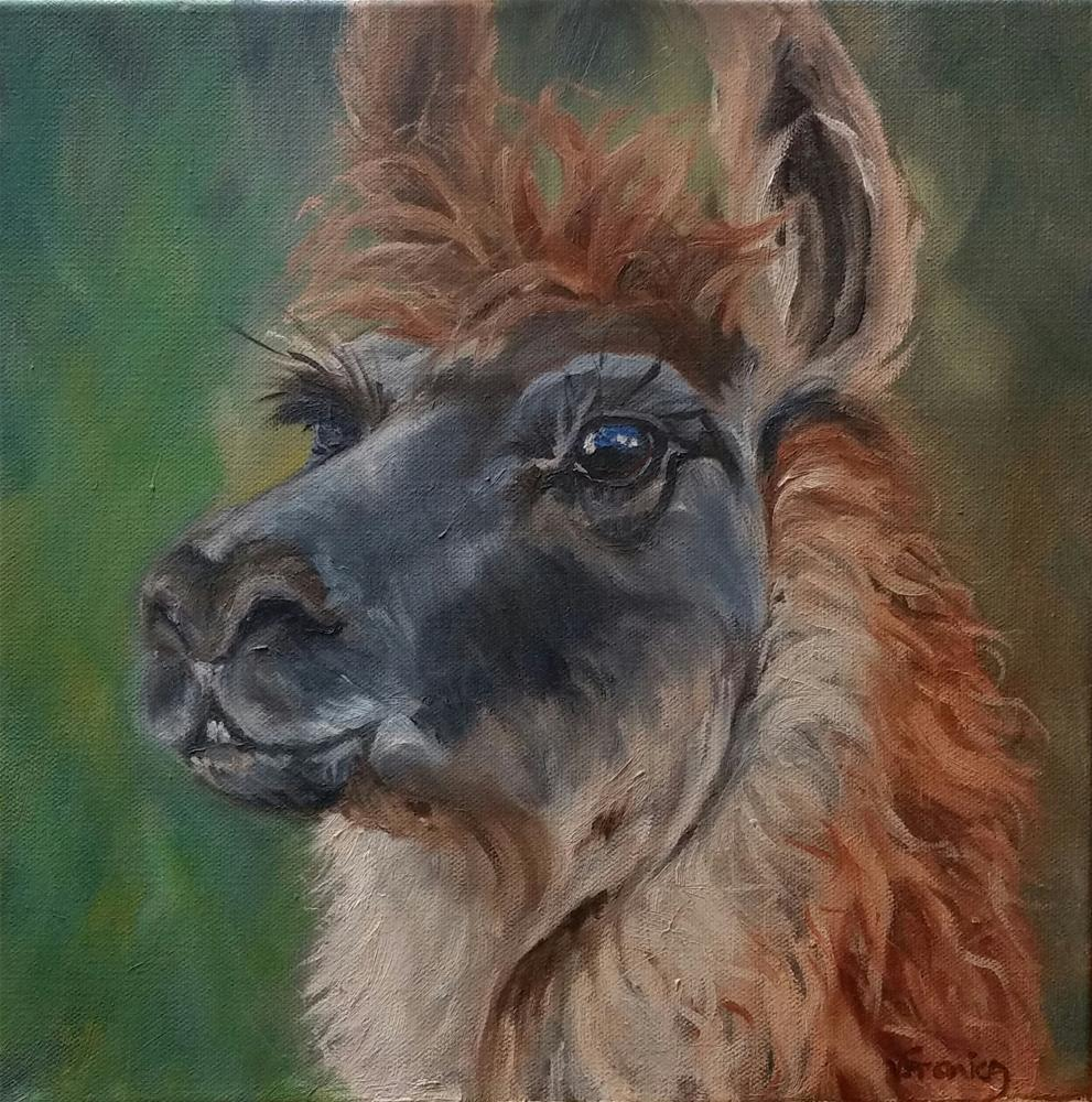 """Those eyes--llama demo"" original fine art by Veronica Brown"