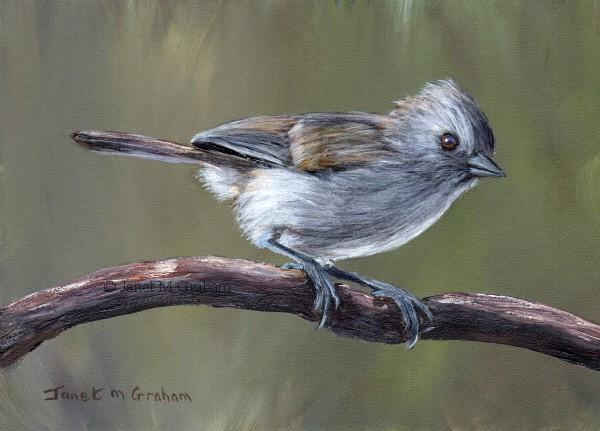 """""""Oak Titmouse No 3"""" original fine art by Janet Graham"""