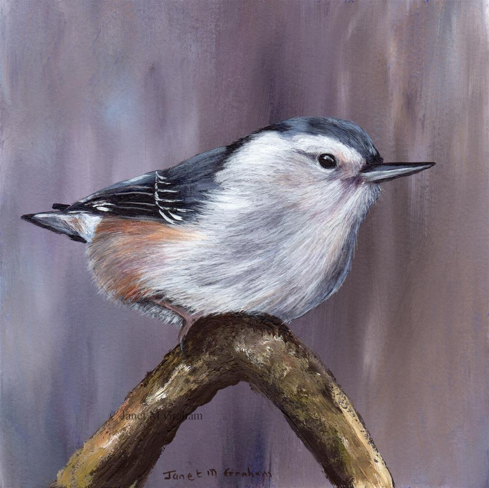 """""""White Breasted Nuthatch"""" original fine art by Janet Graham"""