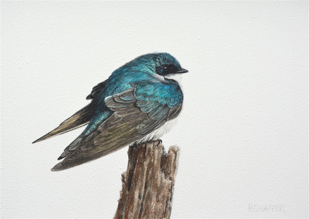 """Tree Swallow"" original fine art by Renay Shaffer"