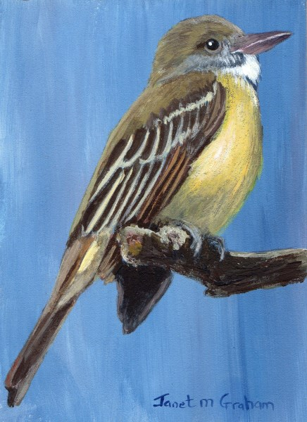 """""""Great Crested Flycatcher ACEO"""" original fine art by Janet Graham"""