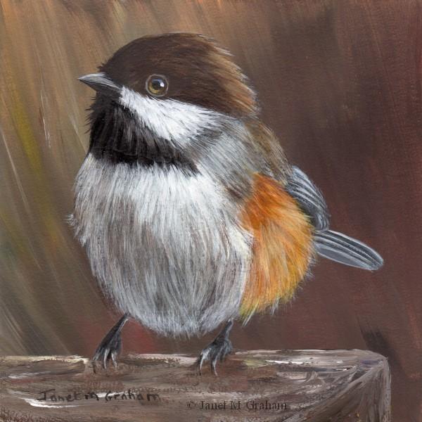 """Boreal Chickadee"" original fine art by Janet Graham"