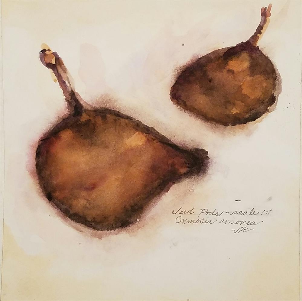 """Seed Pods - Ormosia arborea"" original fine art by Jean Krueger"