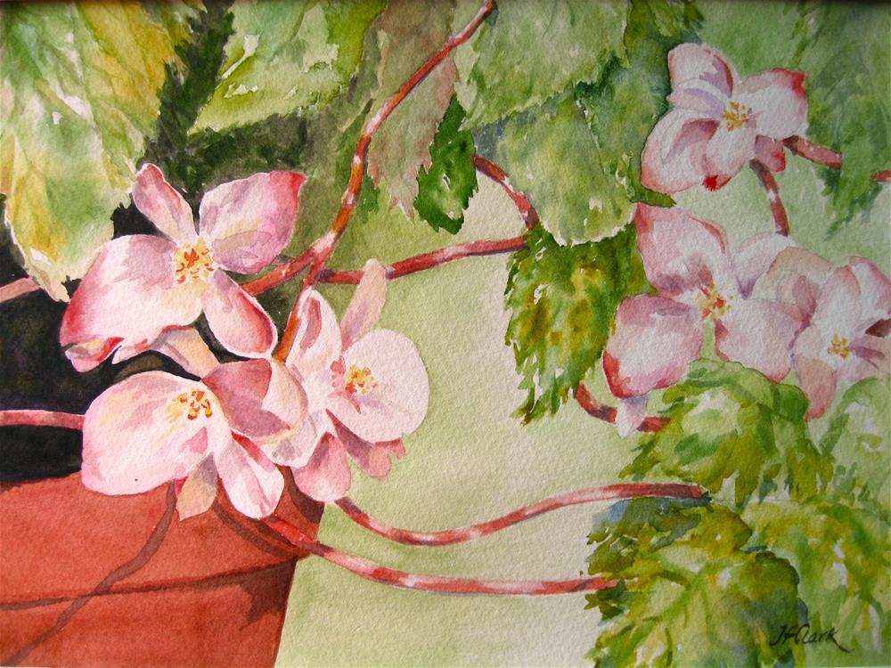 """Begonia Meet-Up"" original fine art by Judith Freeman Clark"