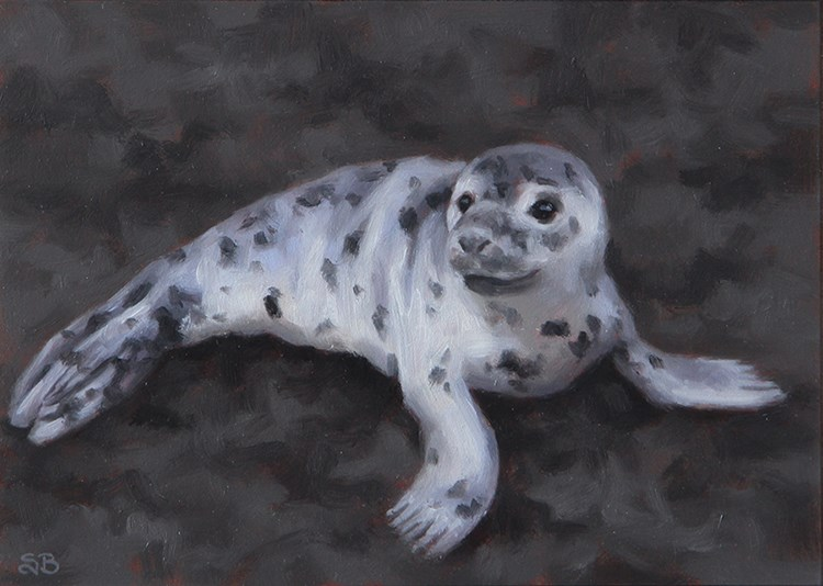 """Grey Seal Pup"" original fine art by Sarah Becktel"